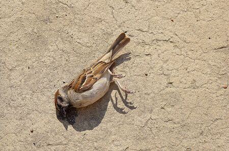 The corpse of a sparrow died from an unknown disease on a clay surface. Stock fotó