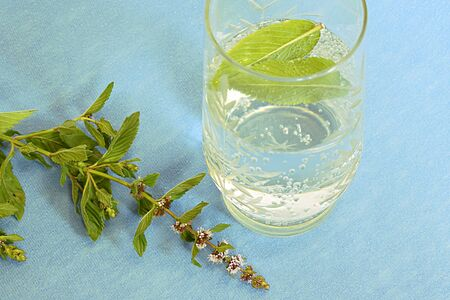A glass of mineral water and mint, a sprig of flowering mint on a golobom background.