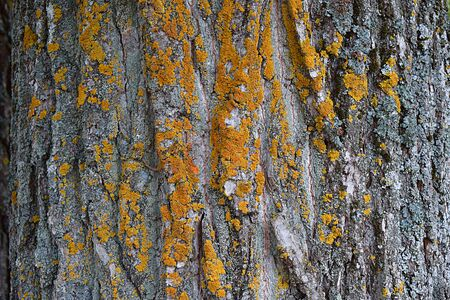 Yellow and orange moss on a Korean old tree, background.