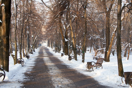 Alley in the park in the winter in the city center photo
