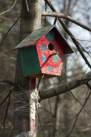 Bright birdhouse in Central Park, attached to a tree. photo