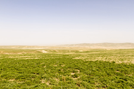 green spring steppe with a gust of wind on the sand