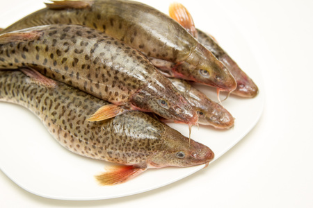 ichthyology: minnows on a white plate on each other