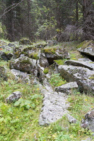 boulders: boulders covered with moss in the forest