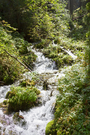 mountain stream running through the trees and greenery