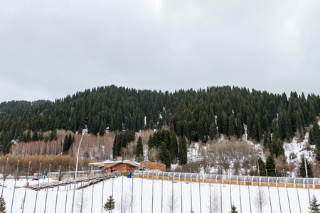 slope: slope with trees in the ski resort