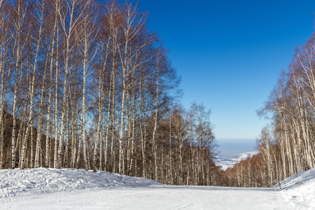 ski runs: ski runs through a birch grove on blue sky background in Kazakhstan