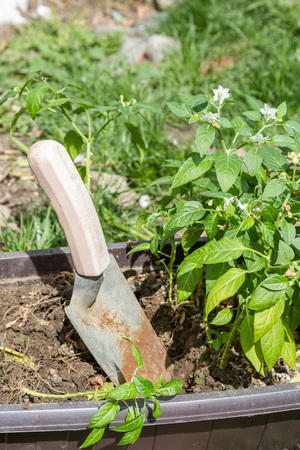 Garden scoop for plant transplantation in spring