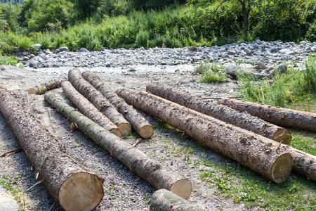 felled: Logs spruce lying near a mountain river Stock Photo