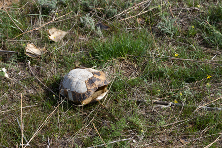 empty turtle shell in the steppe among the grass