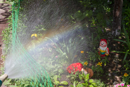 water is sprayed from the hose during watering Stock Photo