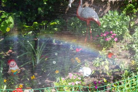 rainbow when watering the front garden with decorative flamingos Reklamní fotografie