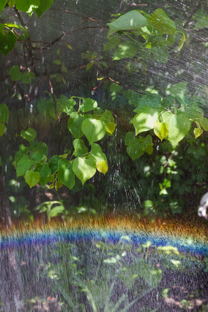 rainbow in the spray of water against foliage Reklamní fotografie