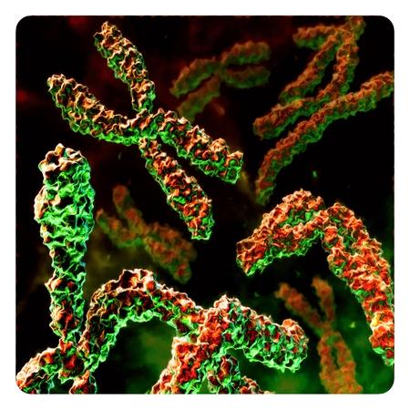 macro: Abstract macro virus