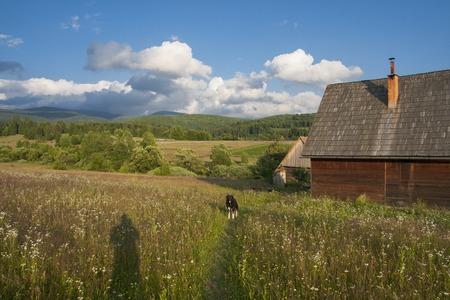 Rural wooden house in Transylvania. Beautiful meadow. Reklamní fotografie