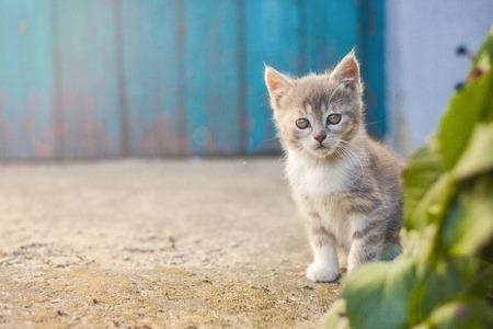 Cute kitten in front of a blue door