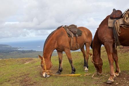 Horses on Easter Island Stock Photo - 9486197