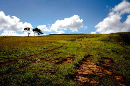 Landscape view of the Easter Island volcano with trees
