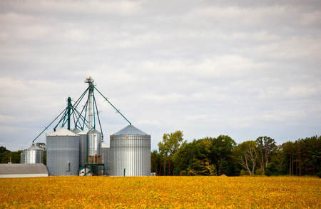 Farm silos storage towers in yellow crops landscape view