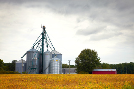barns: Farm silos storage towers in yellow crops landscape view