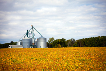 canada agriculture: Farm silos storage towers in yellow crops landscape view