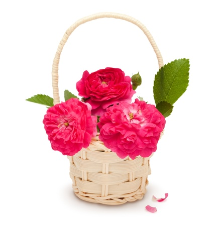 Bouquet of pink roses in a basket isolated on white background Stock Photo - 12166817