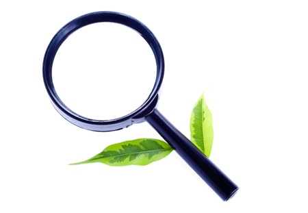 Magnifier with green leaves isolated on white background