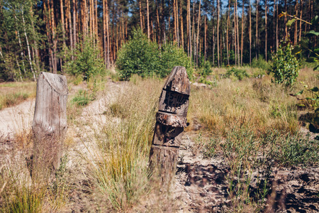 Deforestation. Nature Conservation. An indicative pillar in the forest.