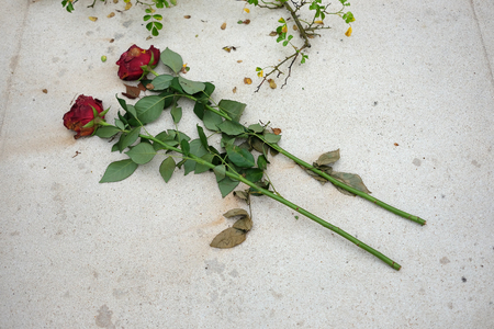 tragic: Two roses on the tombstone in memory of the tragic death