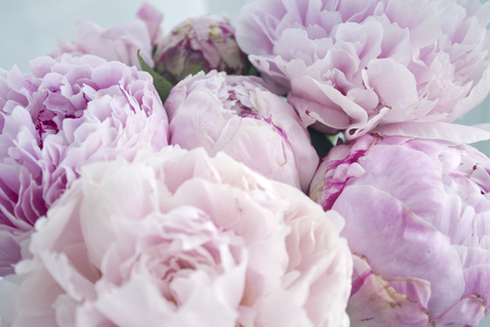 Closeup fresh bunch of pink peonies peony roses flowers pastel closeup fresh bunch of pink peonies peony roses flowers pastel floral wallpaper card mightylinksfo