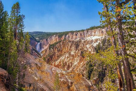 View of Grand Canyon of Yellowstone and lower falls from artist point trail. Yellowstone National Park. Wyoming. USA 스톡 콘텐츠