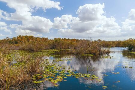 View of freshwater marsh from Anhinga Trail boardwalk in Everglades National Park.Florida.USA