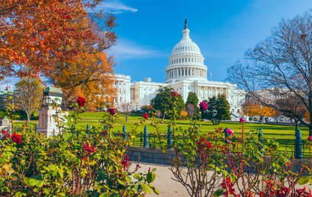 US Capitol building framed by roses and trees in autumn. Washington DC. USA