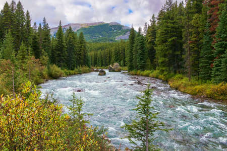 Maligne river the tributary of the Athabasca River in Jasper National Park. Alberta. Canada