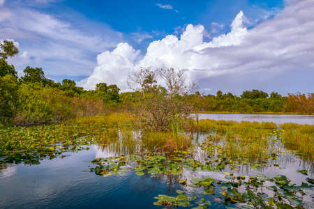Wetlands in Big Cypress National Preserve. South Florida. USA 版權商用圖片