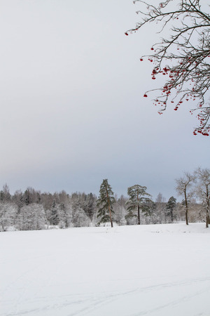 ate: Winter landscape of the forest Stock Photo