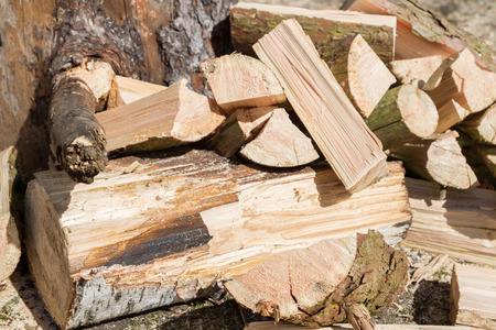 glades: Sticks logs and firewood stacked