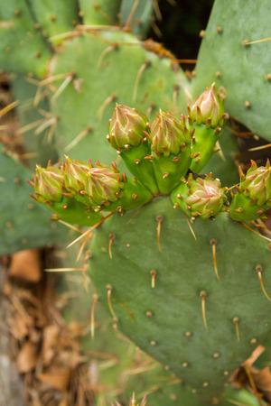 Cactus in the garden in summer