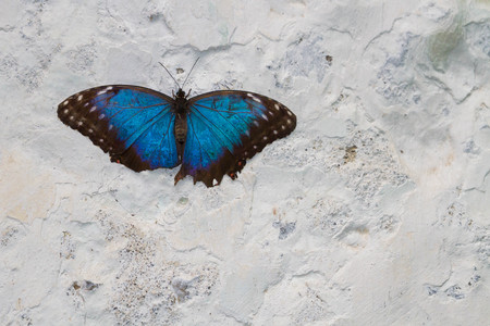 animal parts: Exotic butterfly on the butterfly show