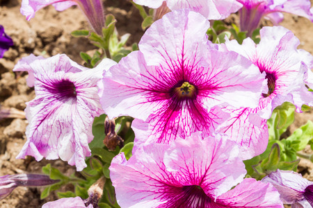 Beautiful flowers in the flowerbed on the street in dry cracked earth