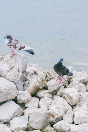 Pigeons sit on large stones in the lake