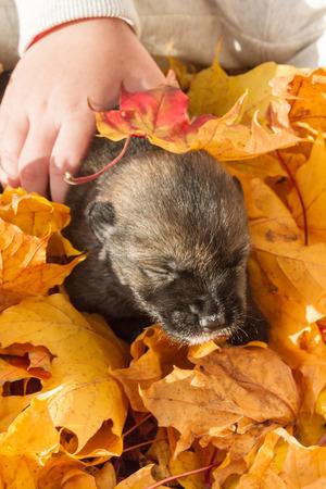Little black dog puppy mongrels on autumn leaves