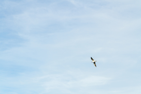 Bird Seagull flying in the sky in cloudy weather Stock Photo