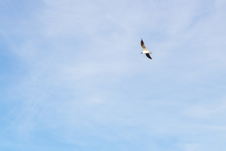 Bird Seagull flying in the sky in cloudy weather Stock Photo - 114428337