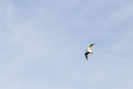 Bird Seagull flying in the sky in cloudy weather Stock Photo - 114428298