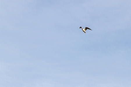 Bird Seagull flying in the sky in cloudy weather Stock Photo - 114428772