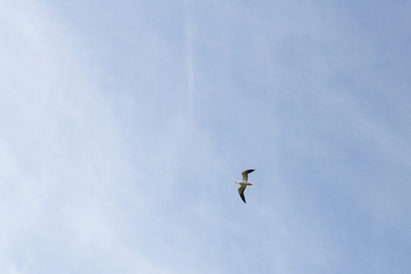 Bird Seagull flying in the sky in cloudy weather Stock Photo - 114428662