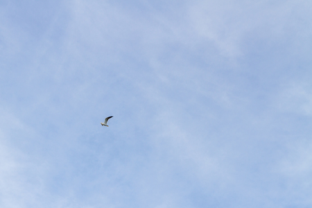 Bird Seagull flying in the sky in cloudy weather Stock Photo - 114428594