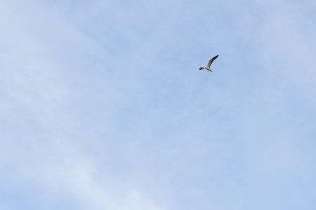 Bird Seagull flying in the sky in cloudy weather Stock Photo - 114428473
