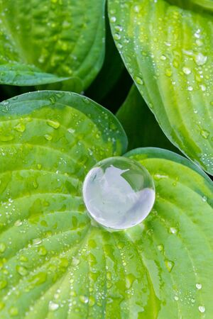Transparent glass ball lying on the green leaves with water drops